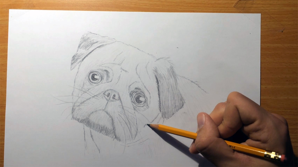 how to draw pug fur