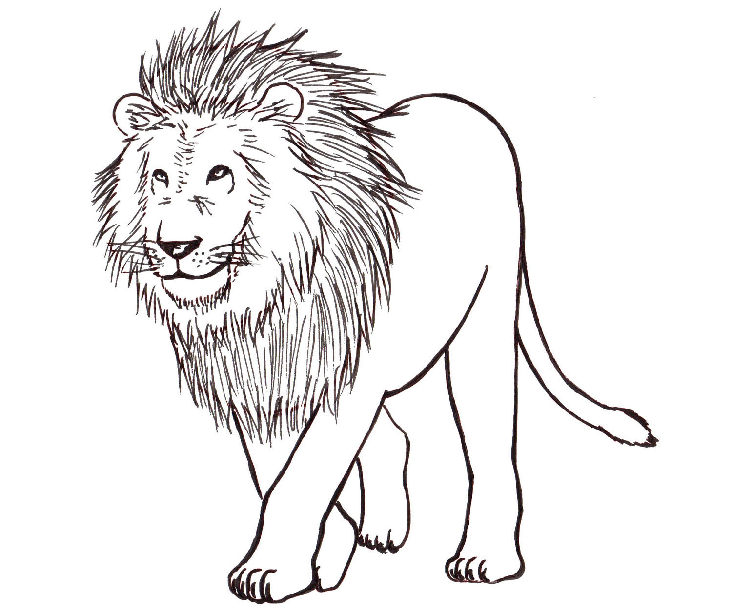 How to Draw a Lion: Step by Step - Liron Yanconsky