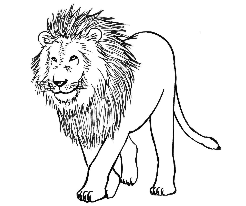картинка льва рисунок легкие возбудила твердость