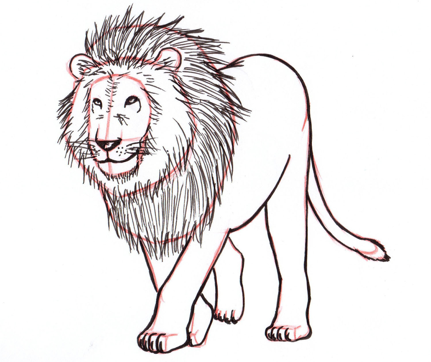 How To Draw A Lion Step By Step Liron Yanconsky