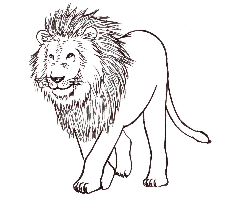 How to Draw a Lion: Step by Step - Liron Yanconsky